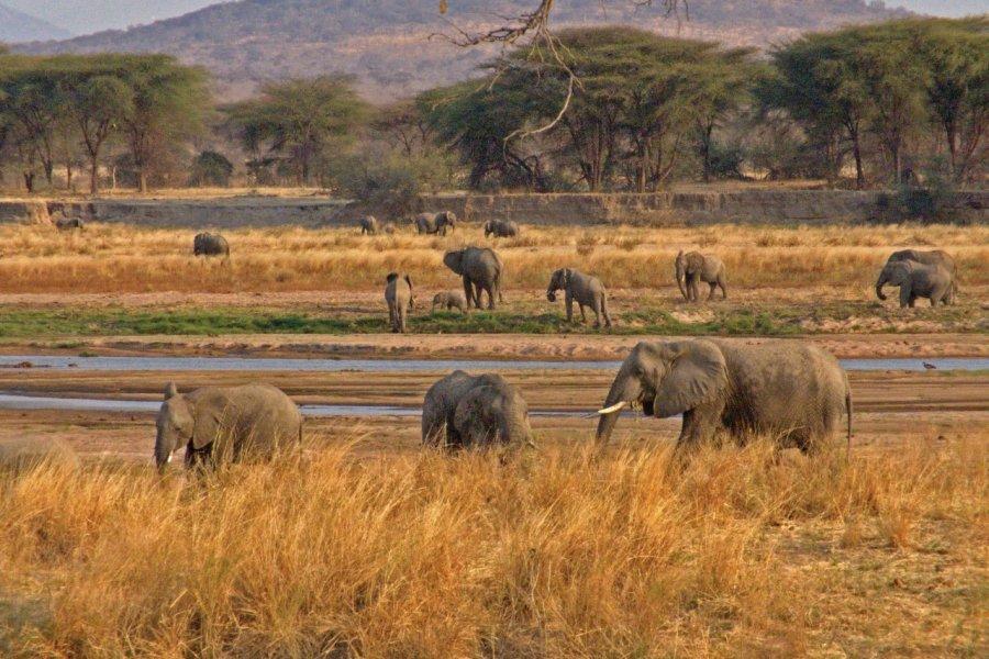 Elephants (© Tanzania Tourist Board))