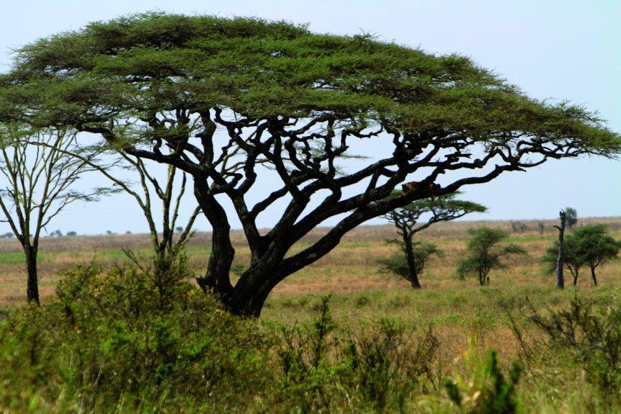 Parc National du Serengeti (© Stephan SZEREMETA))