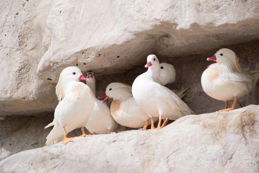 Réserve de vie sauvage d'Al Areen. (© Vinod V Chandran / Shutterstock.com))
