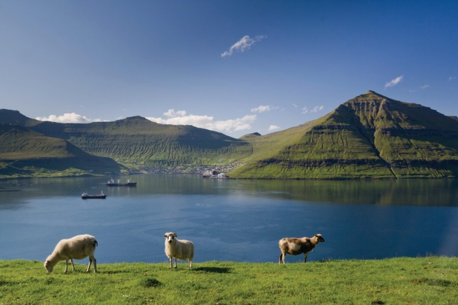 Troupeau de moutons des Îles Féroé. (© lazmi - iStockphoto))