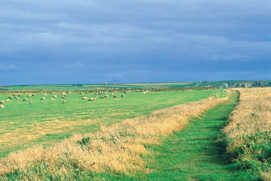 Paysage des environs de Newquay. (© Alamer - Iconotec))