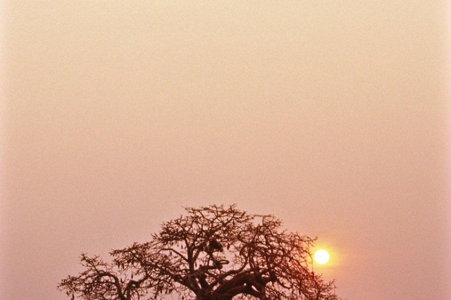 Baobab du parc national de Kissama, dans la province de Luanda. (© Tropicalpixsingapore - iStockphoto))