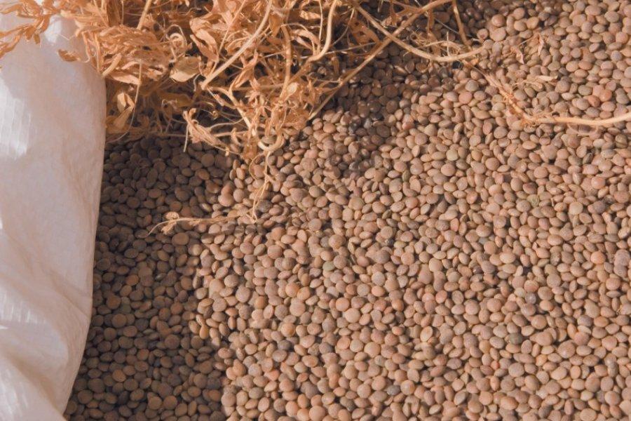 Lentilles de Cilaos. (© Author's Image))