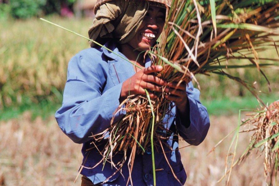 Battage du riz. (© Author's Image))