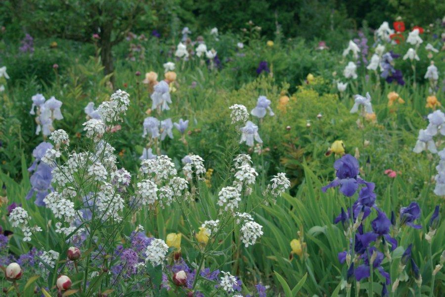 Jardins de Claude Monet, Giverny - Clos Normand (© Stéphan SZEREMETA))