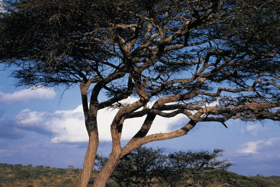 Plaine de Manyara, deux jeunes Masaï (© Tom Pepeira - Iconotec))
