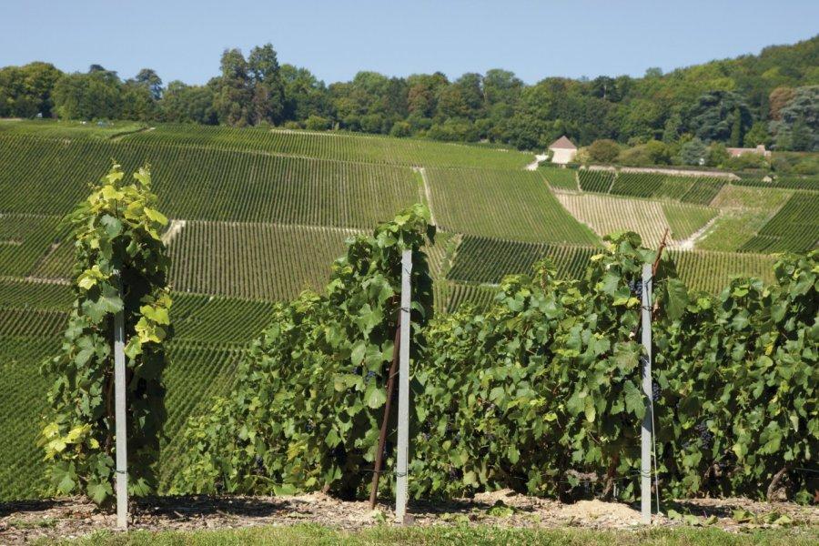 Vignobles de Hautvillers (© Coica - Fotolia))