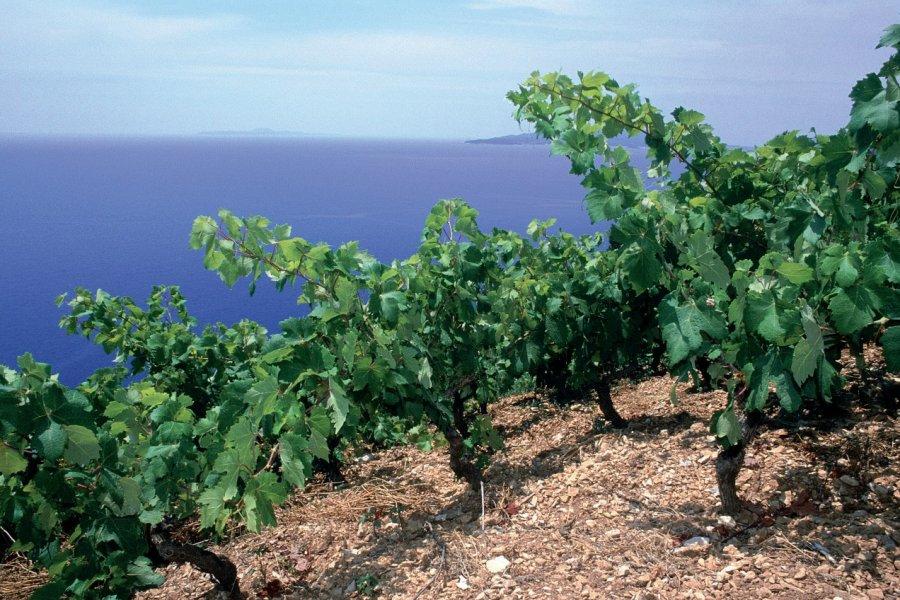 Vignoble de l'île de Hvar. (© Ana NEVENKA - Iconotec))