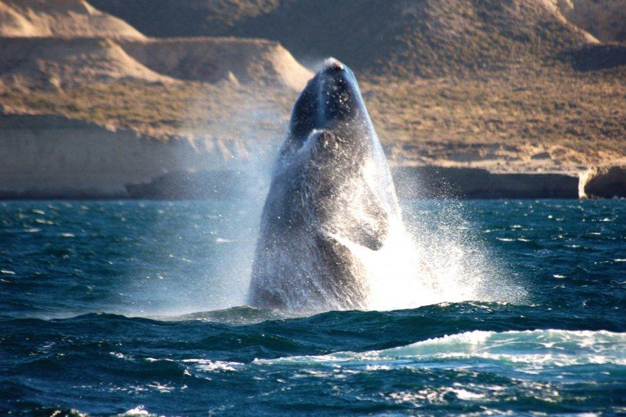 Baleine franche australe de Puerto Madryn. (© Doderino - Fotolia))