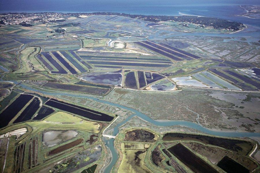 Vue aérienne des marais salants de l'île de Ré (© PHOVOIR))