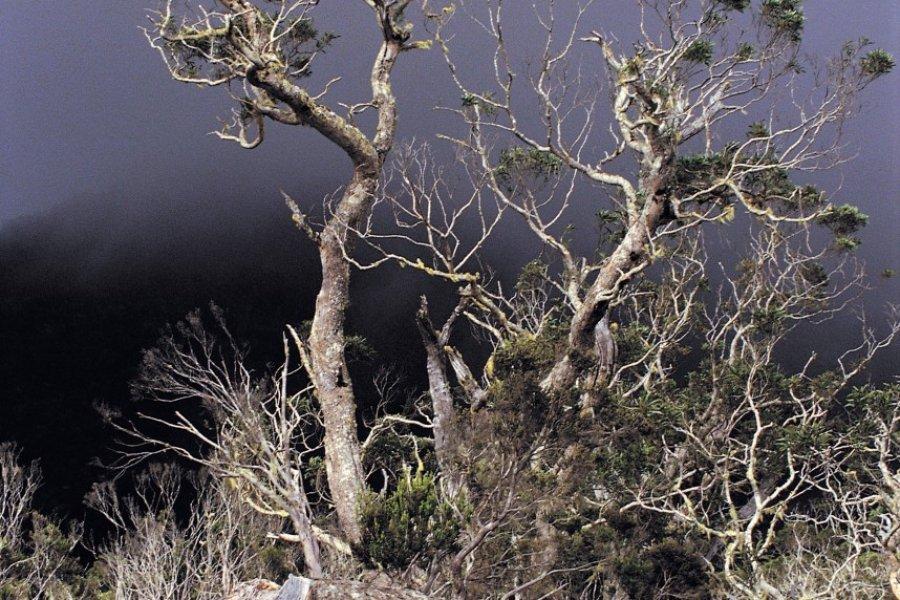 Tamariniers un jour d'orage (© Atamu RAHI - Iconotec))