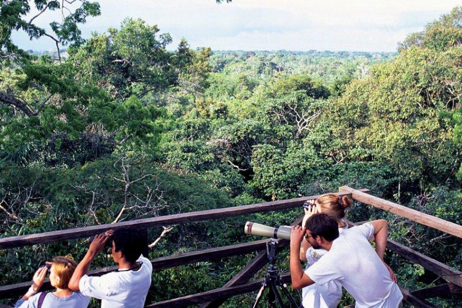 Observation de la faune à la réserve de Rio Napo, environs de Coca. (© Author's Image))