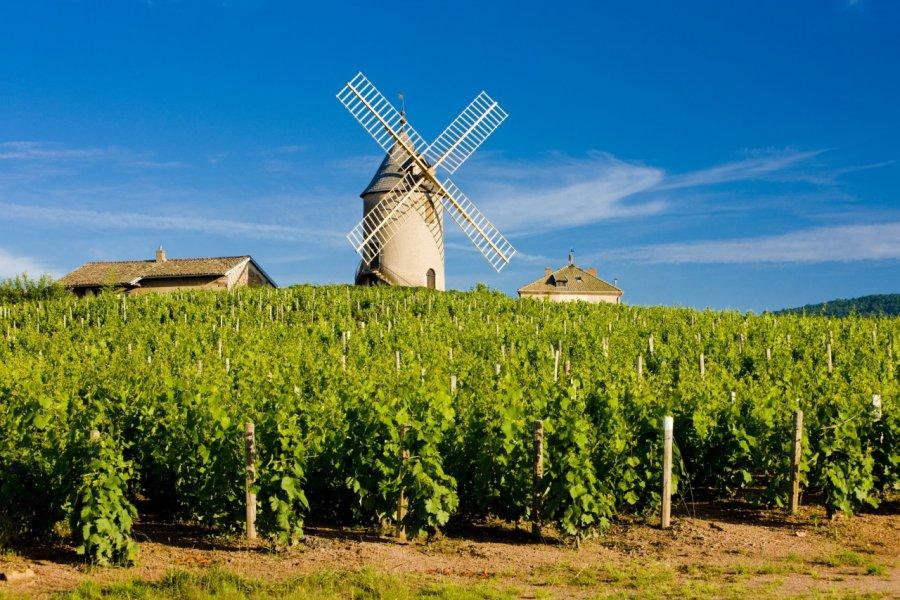 Moulin et vignes de Chénas. (© PHB.cz - Fotolia))