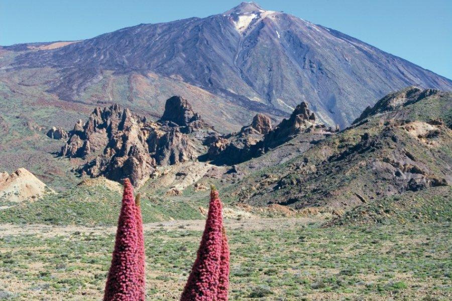 Parque nacional del Teide et pic du Teide, plante vipérine. (© Author's Image))