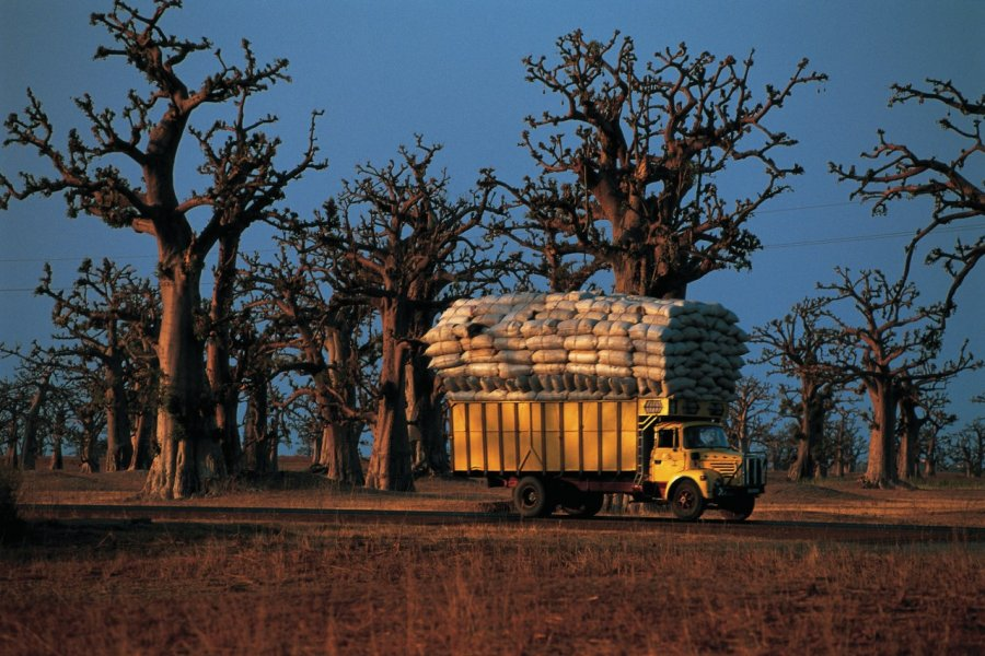 Camion et baobabs, presqu'île du Cap vert. (© Tom Pepeira - Iconotec))