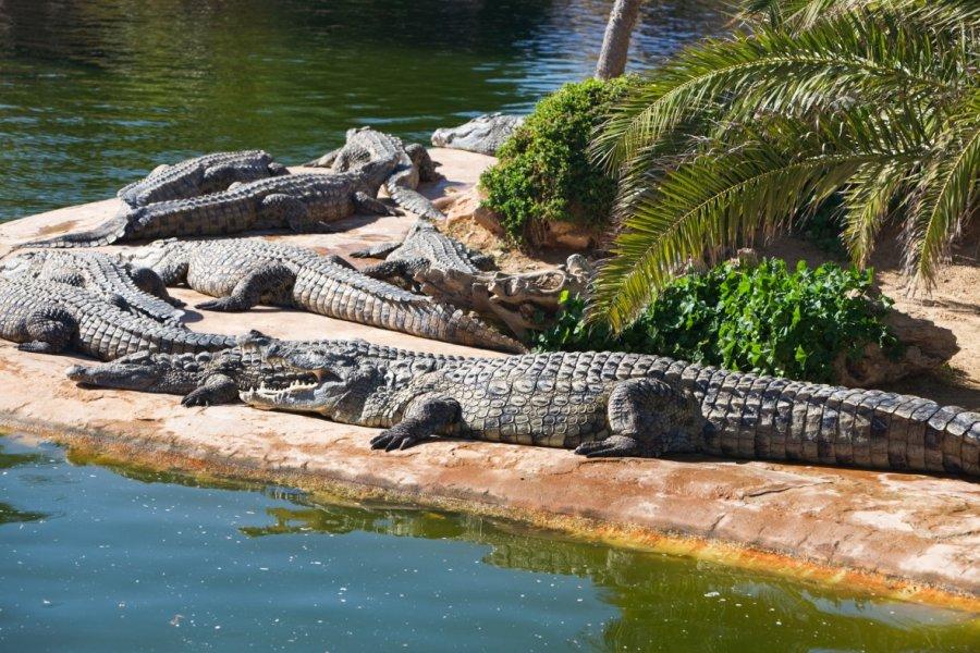 La ferme aux crocodiles. (© Irina Fischer - Shutterstock.com))