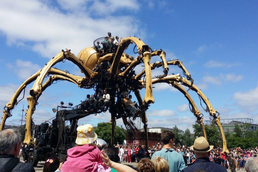 Kumo, l'araignée géante. (© Sophie KESRAOUI))