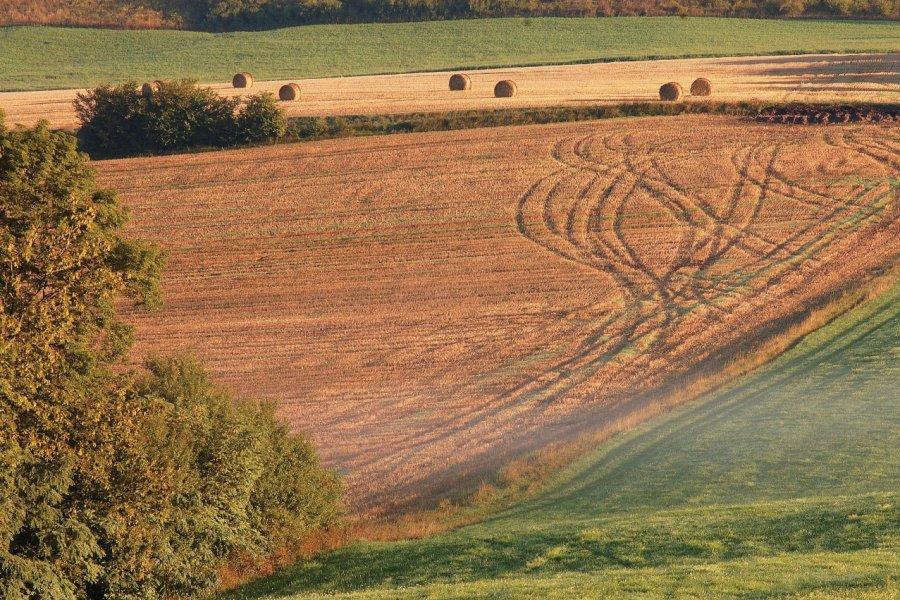 Dessinées par les roues d'engins agricoles, ces arabesques disent la fin des moissons dans le pays de Bitche (© Olivier FRIMAT))