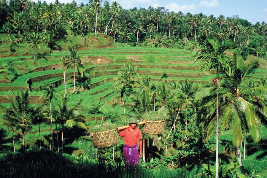 Paysan dans les rizières de Tegallalang. (© Author's Image))