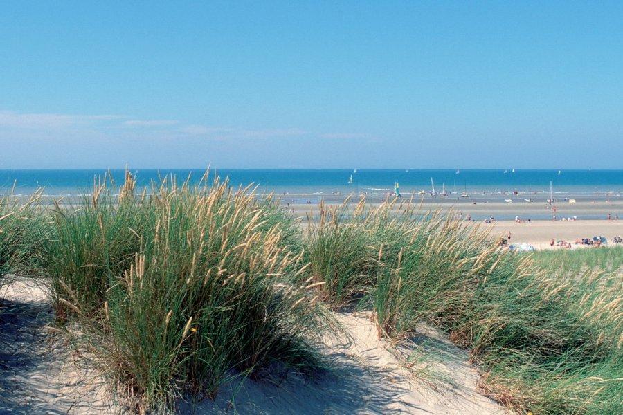 Oyats - Dunes du Pas-de-Calais (© JERÔME BERQUEZ - AUTHOR'S IMAGE))