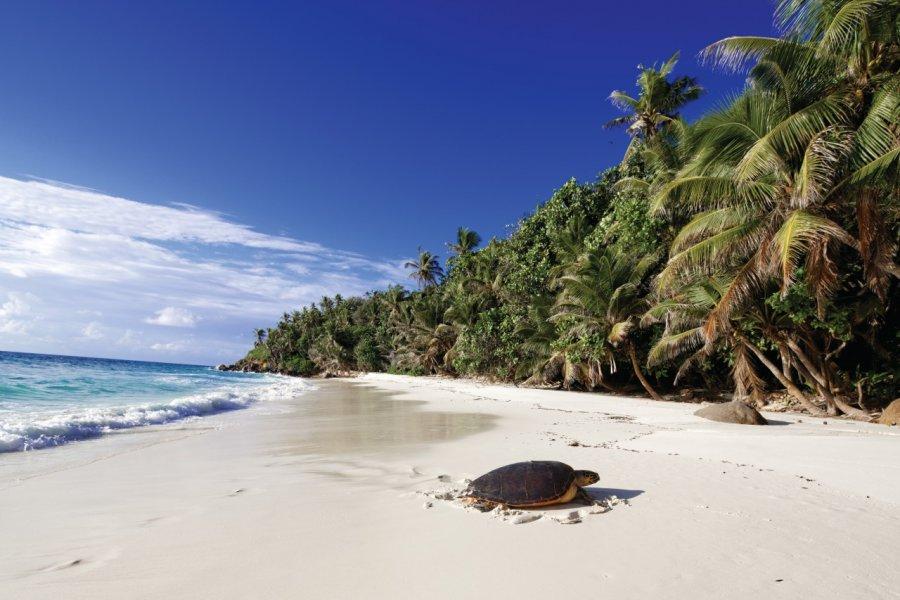 Tortue sur la plage de North Island. (© Barbara & Hartmut Röder - Office du tourisme des Seychelles))