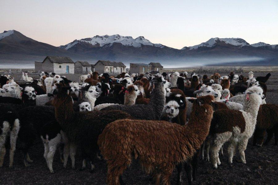 Paysage de l'altiplano à Sajama. (© Arnaud BONNEFOY))