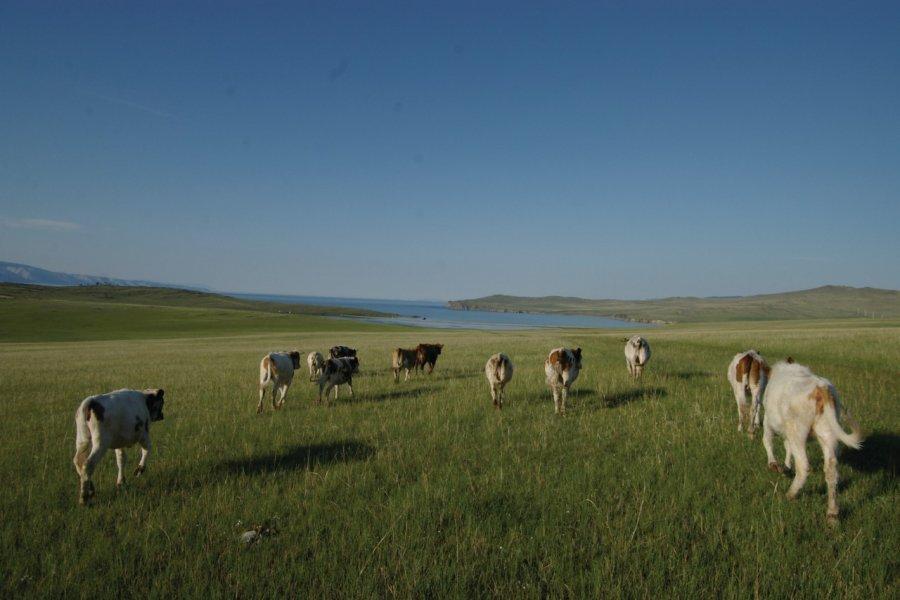 Paysage de steppe sur l'île d'Olkhon (© Stéphan SZEREMETA))