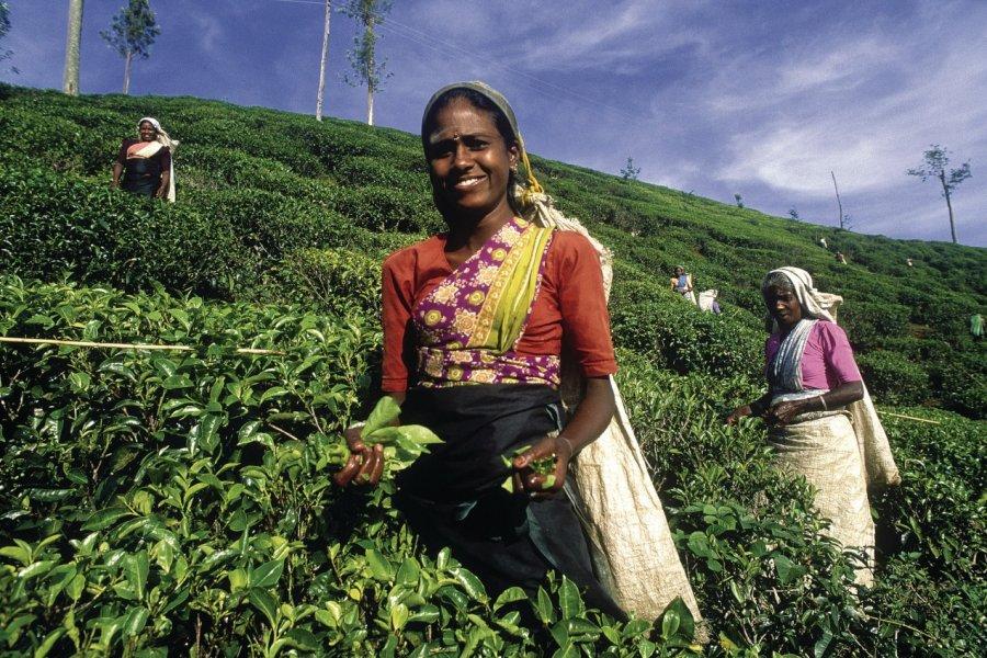 Cueilleuses de thé (© Eric Martin - Iconotec))
