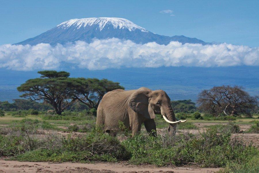 Éléphant dans la région du Kilimandjaro. (© graemes - iStockphoto.com))