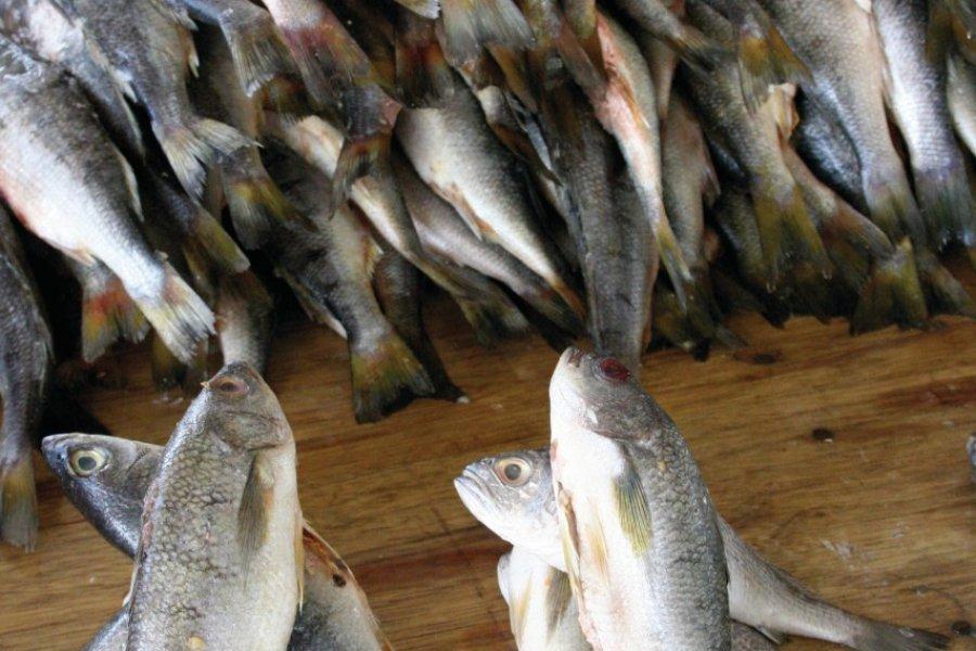 Le poisson est prisé jusque sur les plateaux andins. (© Stéphan SZEREMETA))