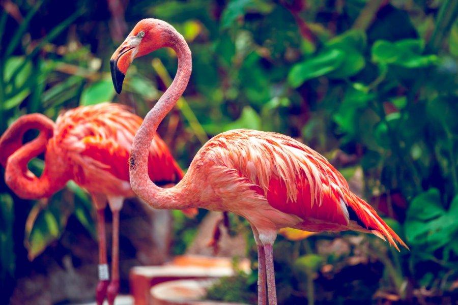Flamants roses au zoo de Singapour. (© Volodymyr Goinyk - Shutterstock.com))
