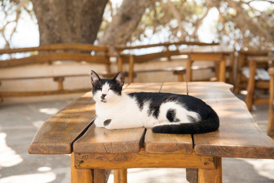 La vie paisible des chats crétois. (© Natalia BRATSLAVSKY - iStockphoto))