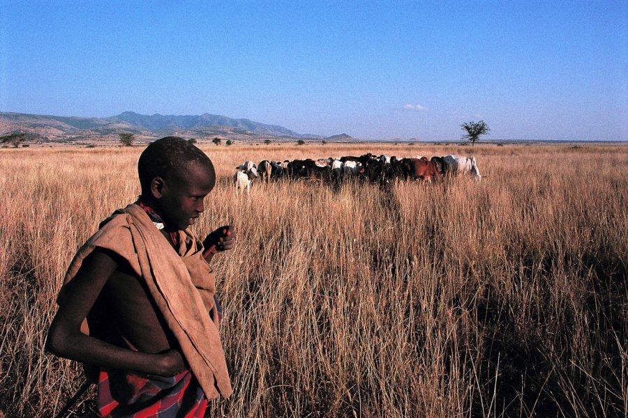 Aire de conservation du Ngorongoro, enfant Masaï et son troupeau (© Tom Pepeira - Iconotec))