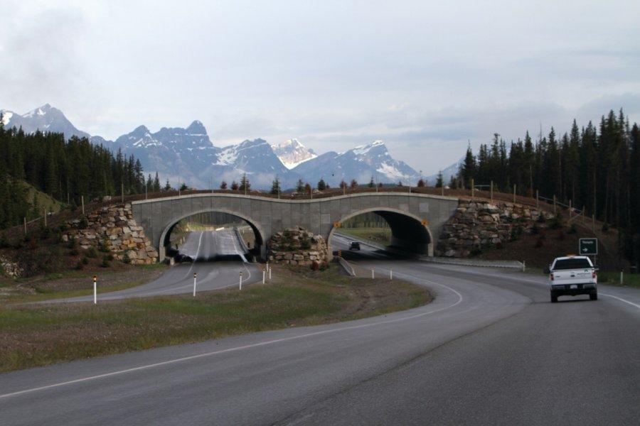 Passage aménagé pour les animaux sauvages sur le Trans-canadienne. (© Stéphan SZEREMETA))