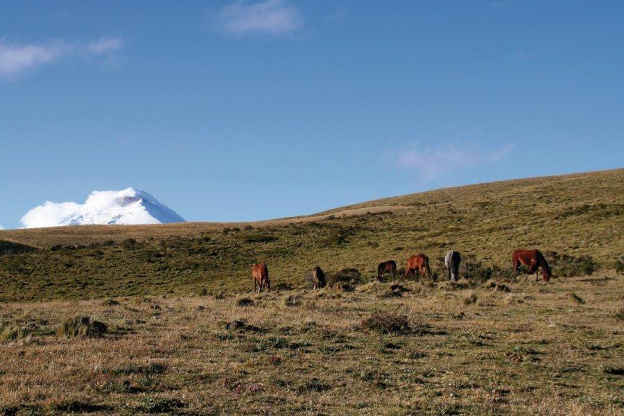 Paysage de paramo sur fond de volcan Cotopaxi. (© Stéphan SZEREMETA))