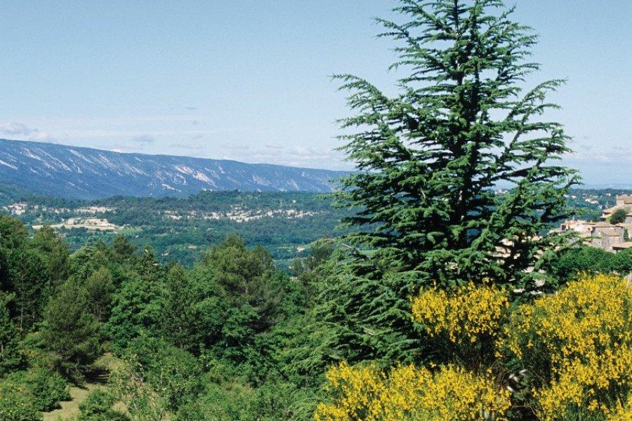 Les environs de Bonnieux (© Irène ALASTRUEY - Author's Image))