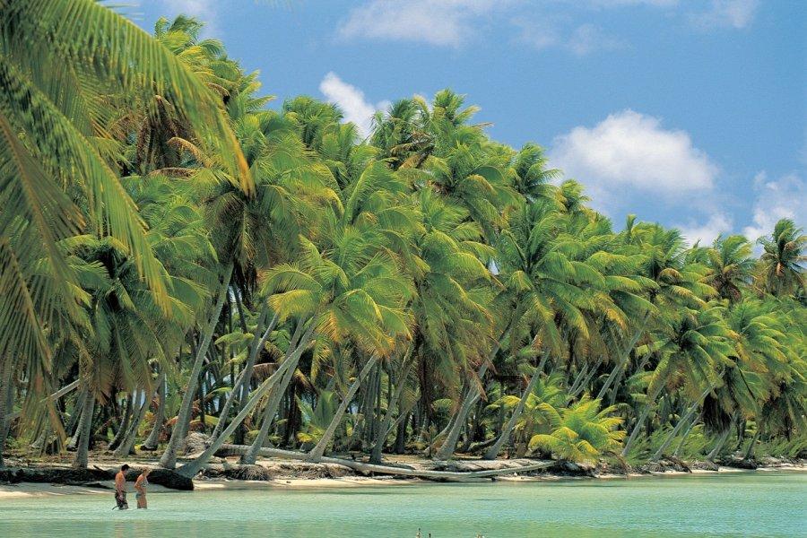 Plage de cocotiers à Nassau. (© Atamu RAHI - Iconotec))