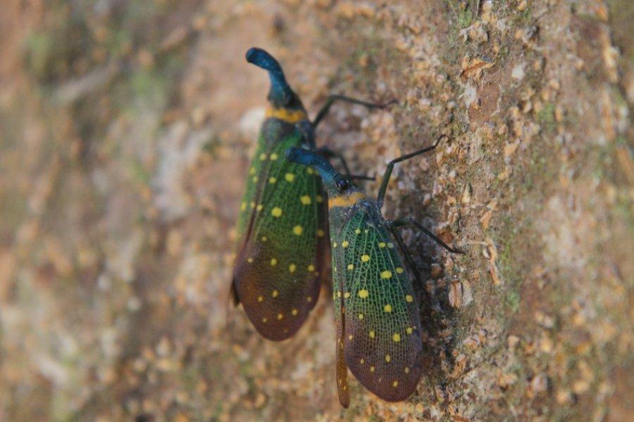 Insecte multicolore (© Stéphan SZEREMETA))