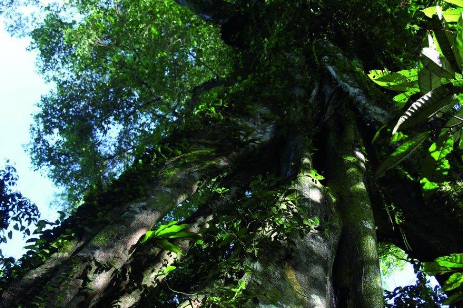 Balade dans la jungle le long du sentier du lac Oxbow (© Stéphan SZEREMETA))