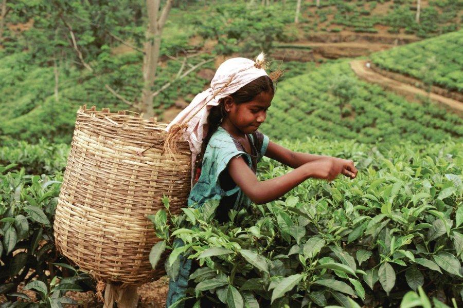Petite ceuilleuse de thé (© Author's Image))