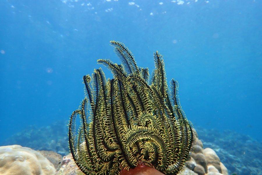 Paysage sous-marin Mu Ko Chang national marine park. (© COCOKUNG - Shutterstock.com))