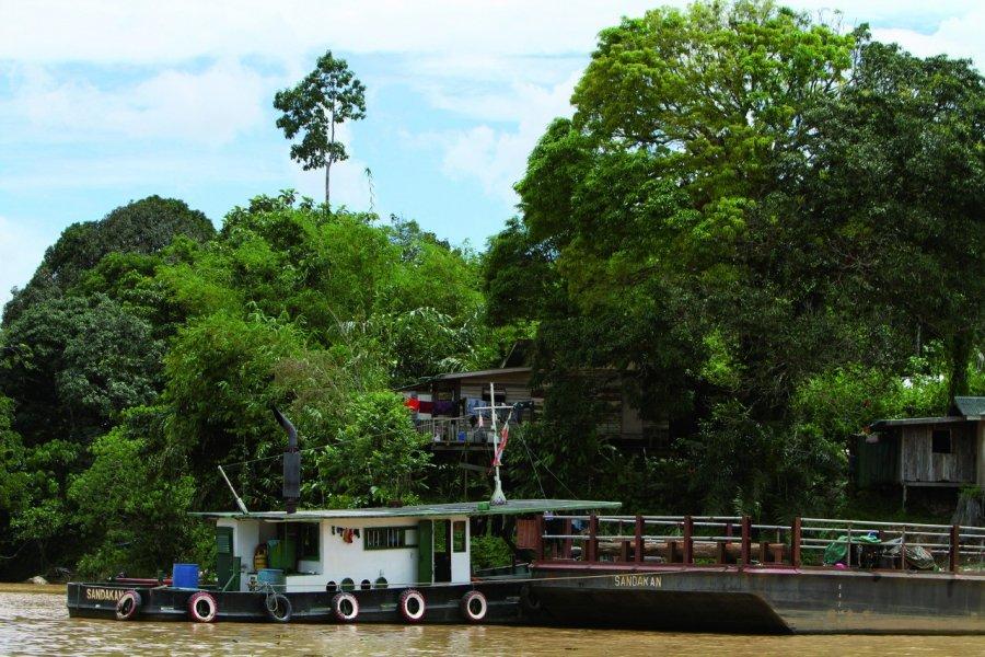 Observation des singes sur la rivière Kinabatangan (© Stéphan SZEREMETA))
