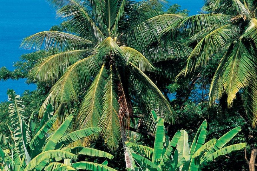 Sainte-Lucie possède une végétation luxuriante. (© Hugo Canabi - Iconotec))