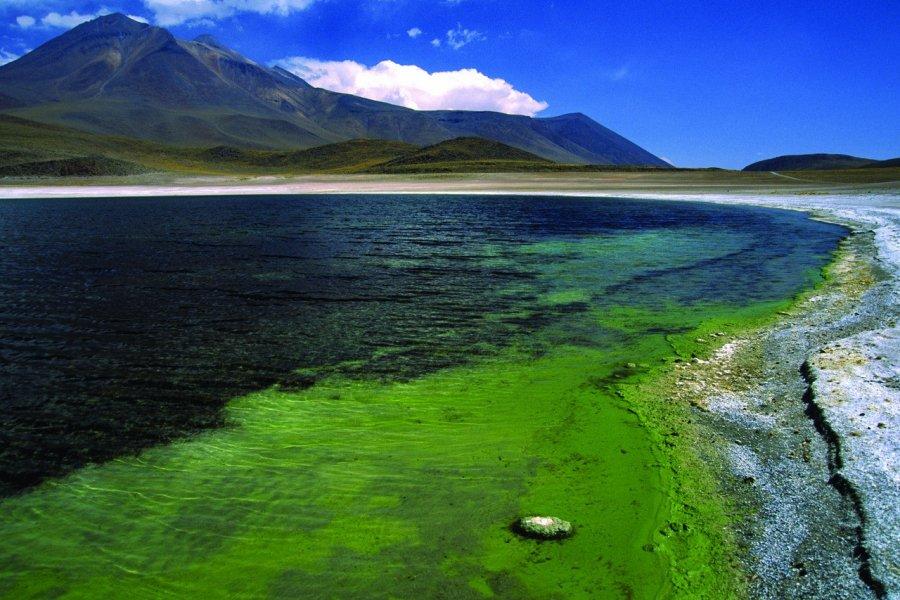 Vue de la Lagune Miscanti (© Sylvie LIGON))
