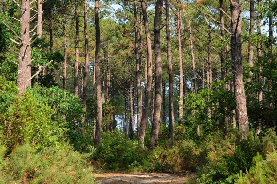 forêt (© PackShot - Fotolia))