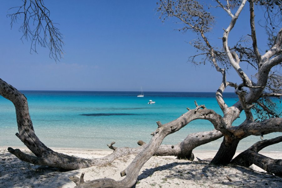 La plage de Saleccia. (© mattei))