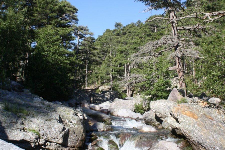 Cascades sur la rivière de l'Asco (© Xavier Bonnin))