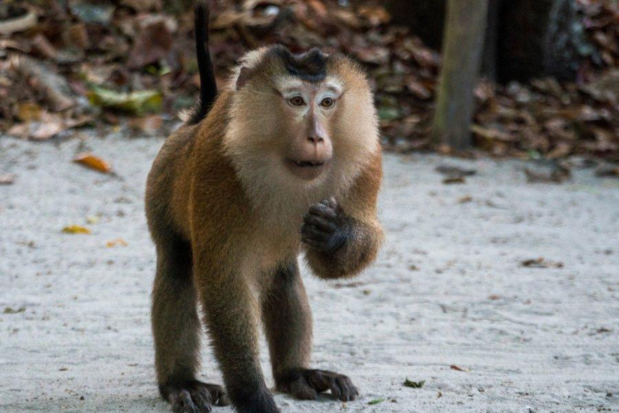 Macaque dans le Mu Ko Chang national marine park. (© Gideon Ikigai - Shutterstock.com))