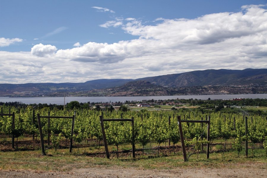 Vigne de la vallée de l'Okanagan. (© Stéphan SZEREMETA))