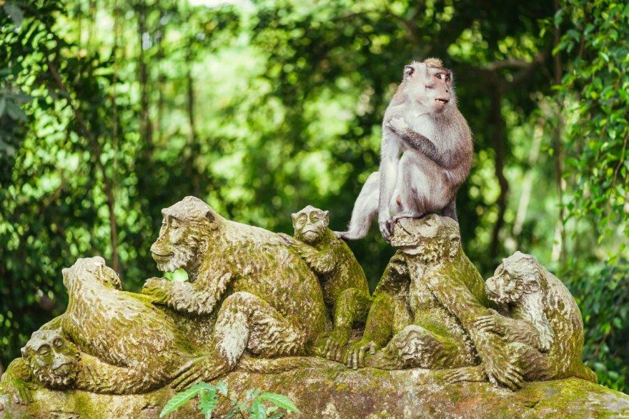 Forêt sacrée des singes. (© Nvelichko / Shutterstock.com))